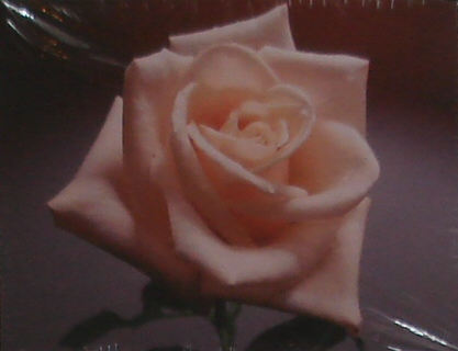 Note Cards - Single Pink Rose