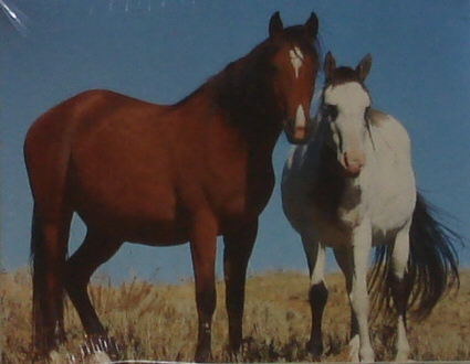 Note Cards - Double Horses